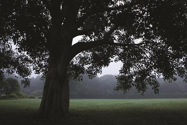 Bodhi Tree at Garden